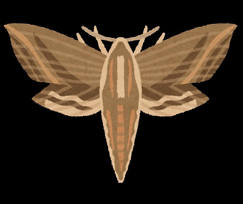 蛾のイラスト
